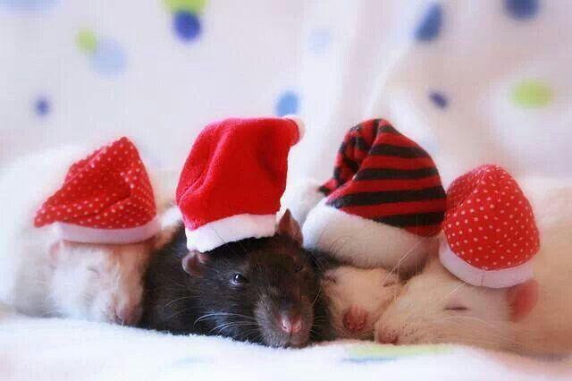 Zalige kerstdagen
